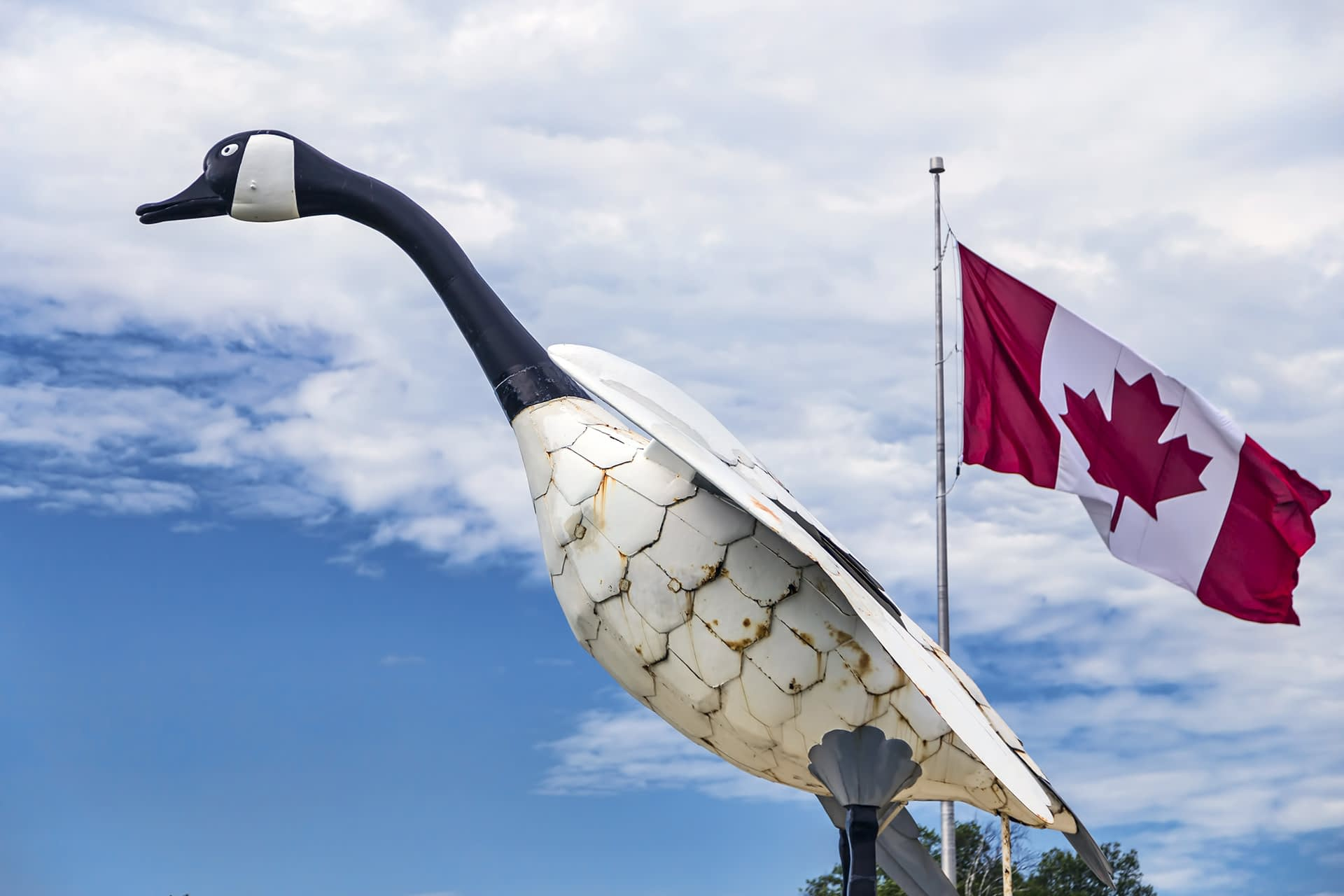 Garsons Fly In Outposts Canadian Goose Statue